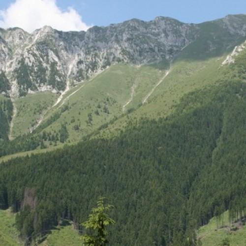 Poiana lui Ştefan, munţii Gutâi