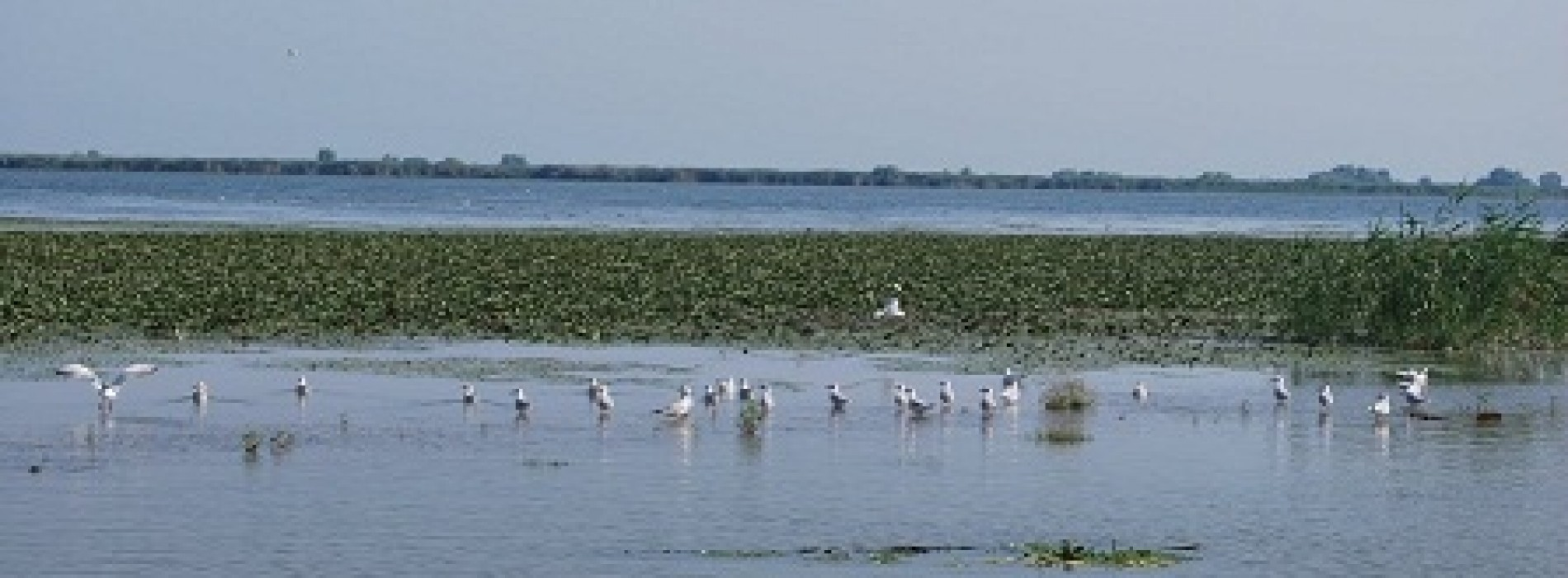 Delta Dunarii si izvoarele termale – puncte de atractie pentru turistii straini