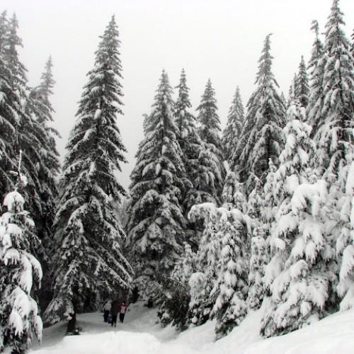 Despre schi şi nu numai