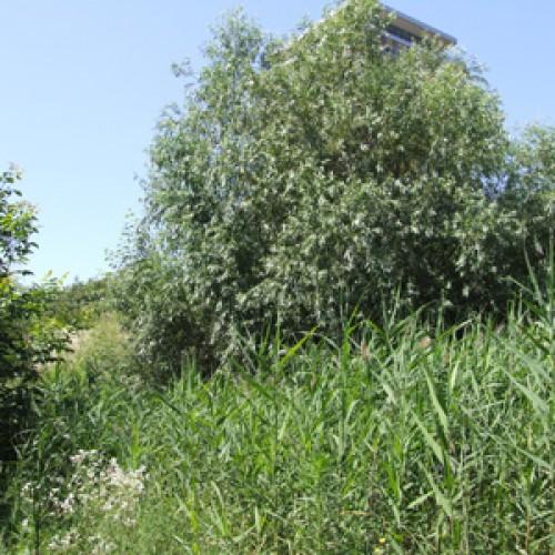 Delta Văcărești devine Parcul Natural Văcărești