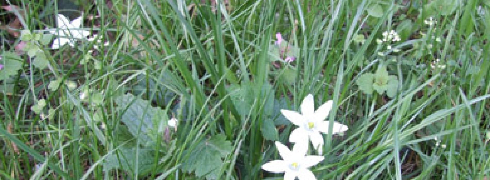 Serbăm Dragobetele şi venirea primăverii