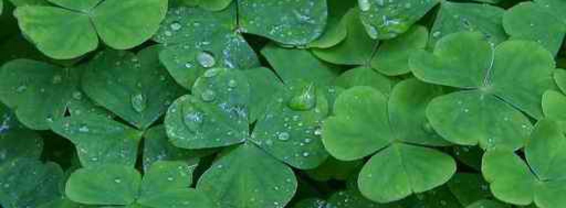 La mulți ani, Irlanda!
