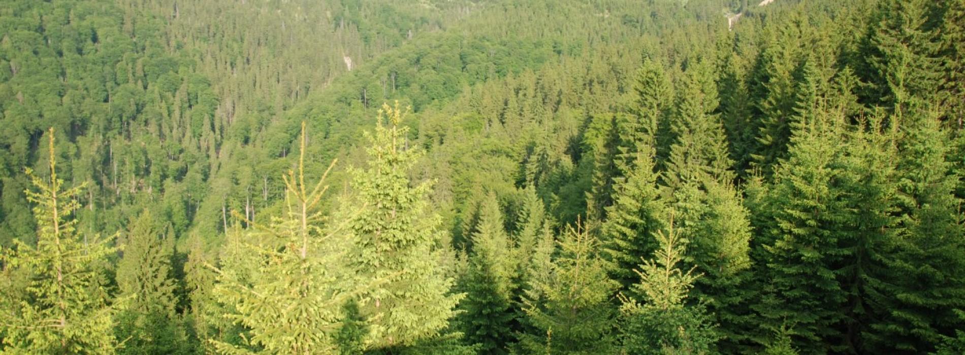 Stațiunea montană Straja, din Hunedoara, este vara loc de plimbare și relaxare