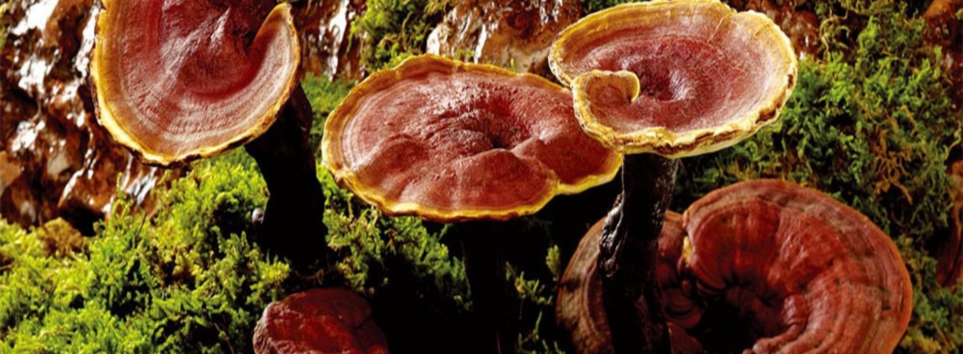 Ce zici de o cafea cu… ciuperci? Cele mai sănătoase ciuperci!