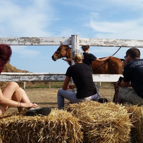 Terapie cu cai în cartierul canadian din Siminoc, Constanța