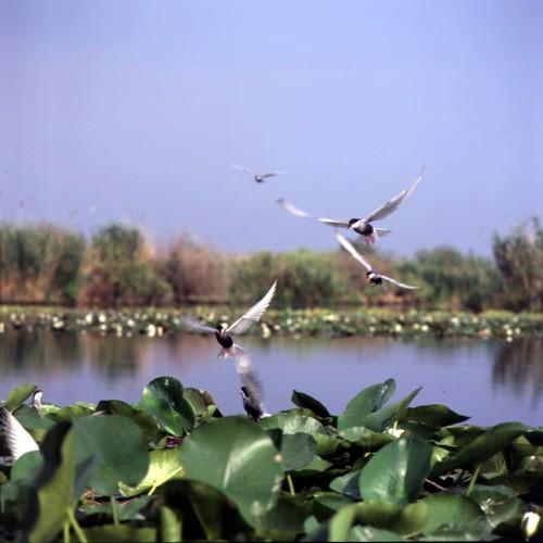 Descoperă Delta Dunării! Aprilie aduce prețuri speciale