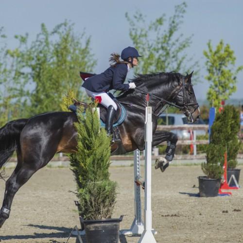 Competiție ecvestră cu exemplare de sute de mii de euro, lângă București