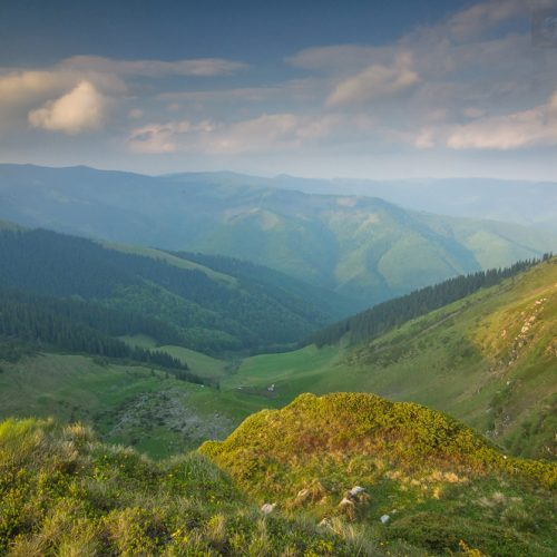 Proiect WWF România: ai grijă de pădure, ai putea primi bani!