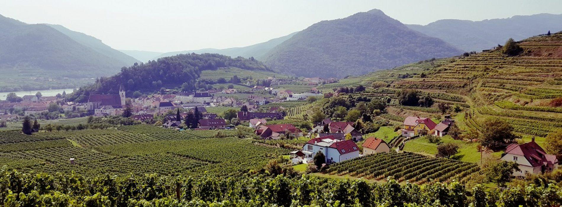 Heuriger, tradiția vienezilor de a se bucura toamna de vinul nou