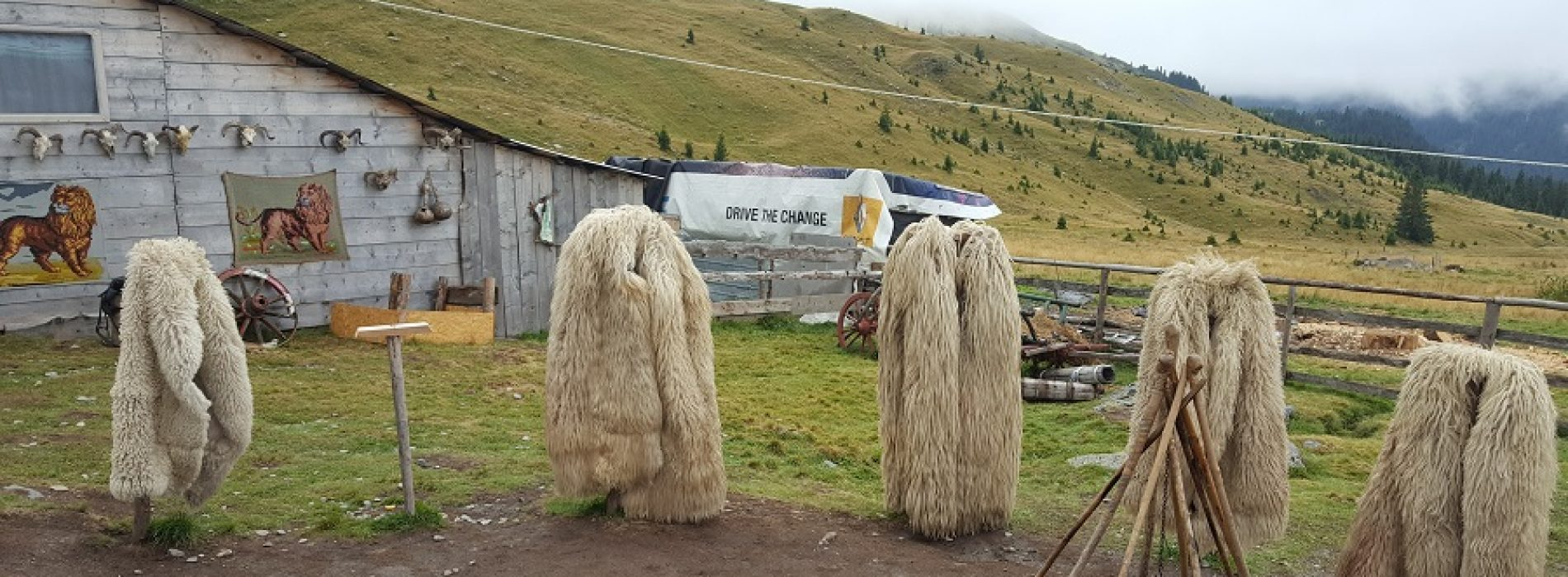 Stâna Ștefanu, obiectivul turistic de neratat de pe Transalpina