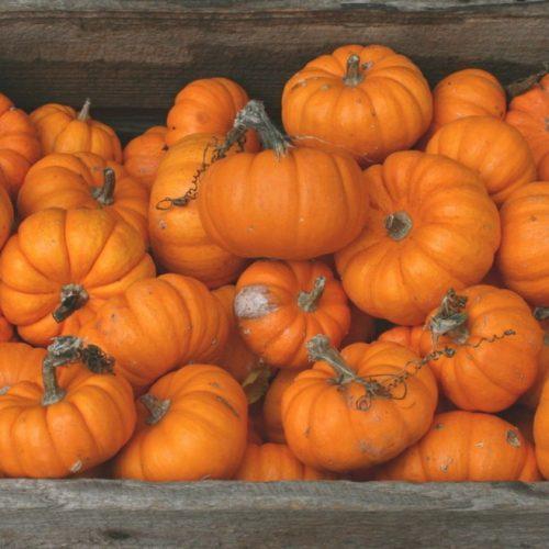 DOVLEACUL de Halloween nesculptat poate fi 100% RECICLAT