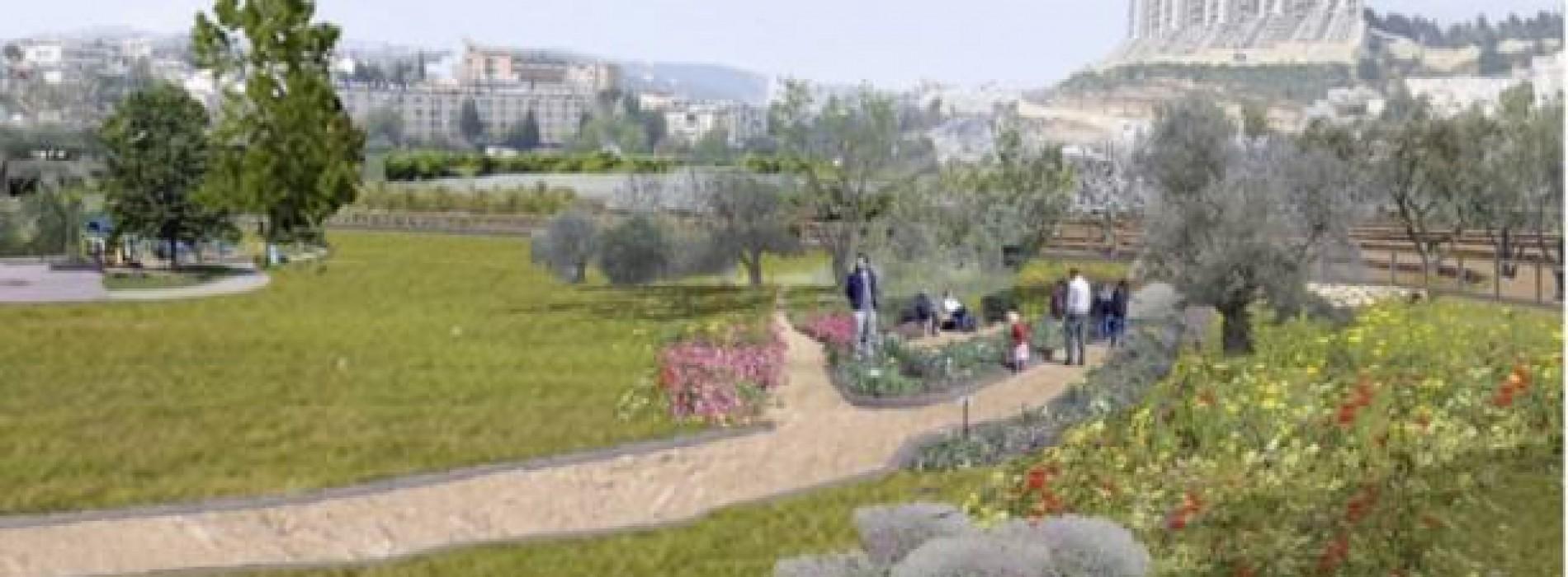 Un parc natural din inima Ierusalimului e plin de gazele